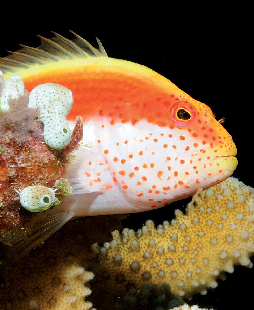 Maldive diving